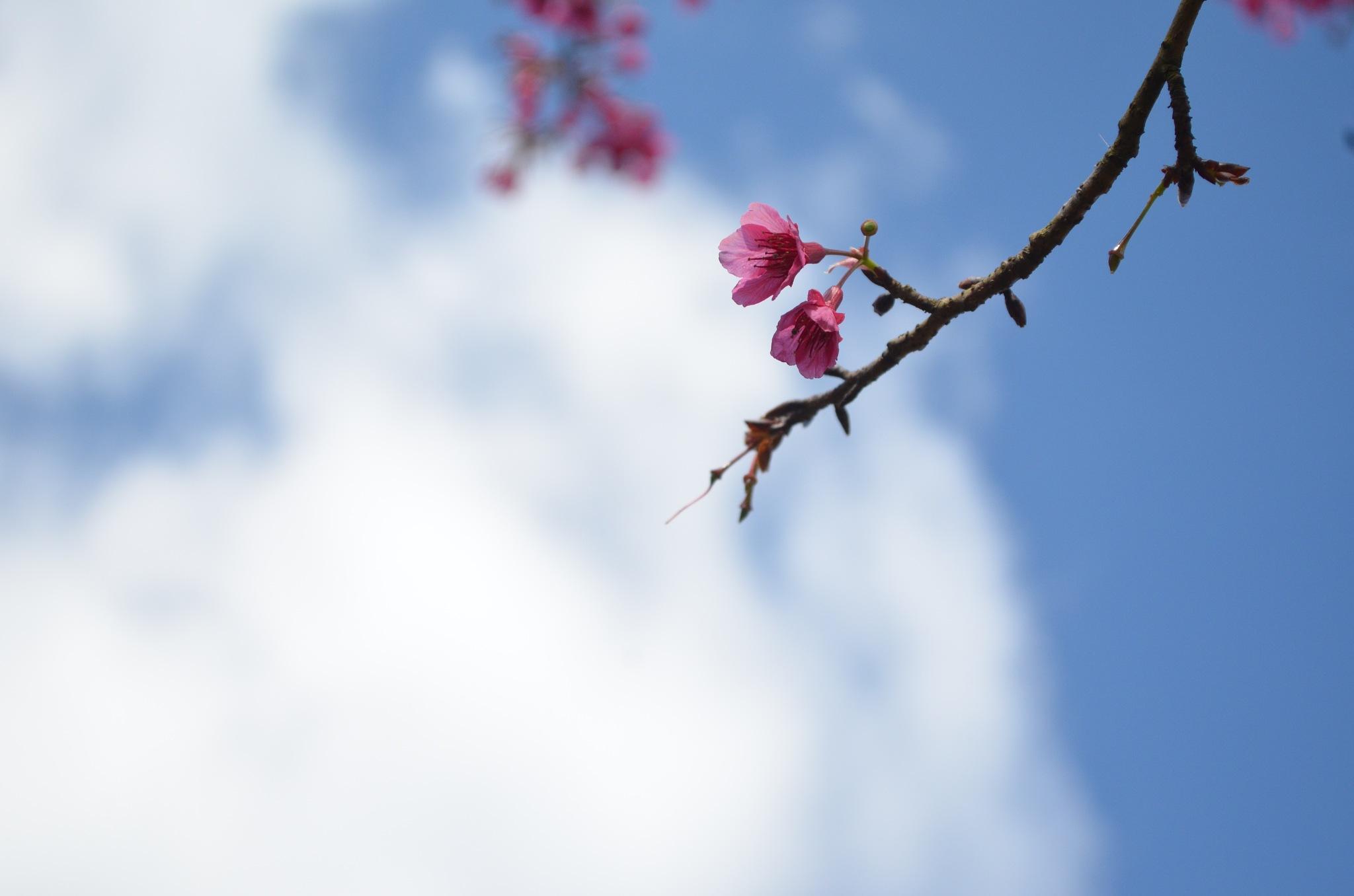 In the Sky by Nirada Somjit