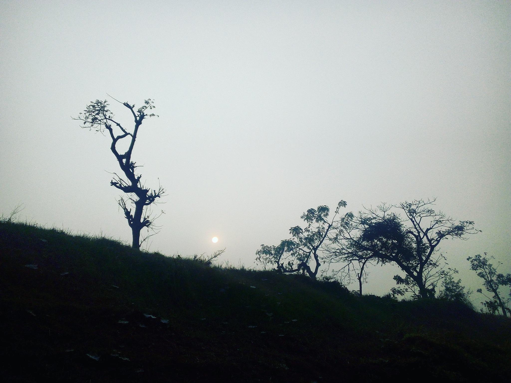 Sun Riser  by Redwone Ratul