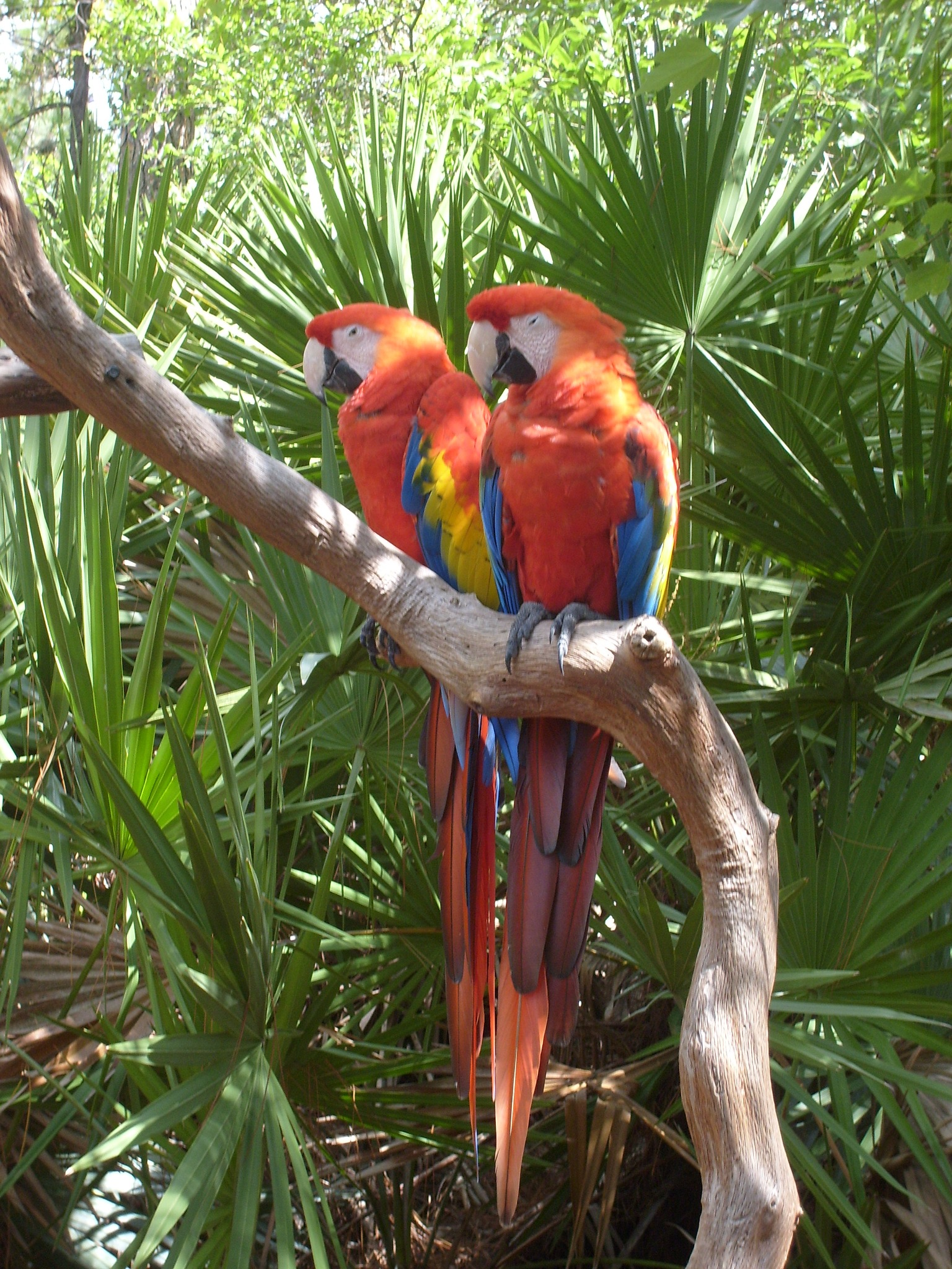 Macaws by Keith Mathews Photo-Art