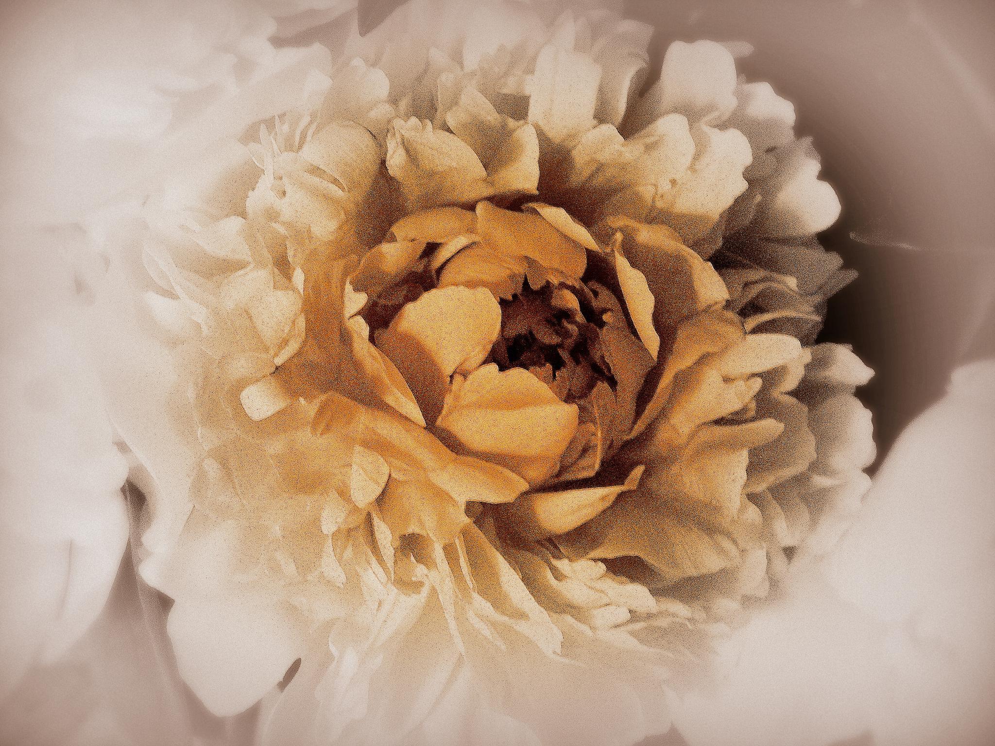 """Bride"" by SigitaBer"