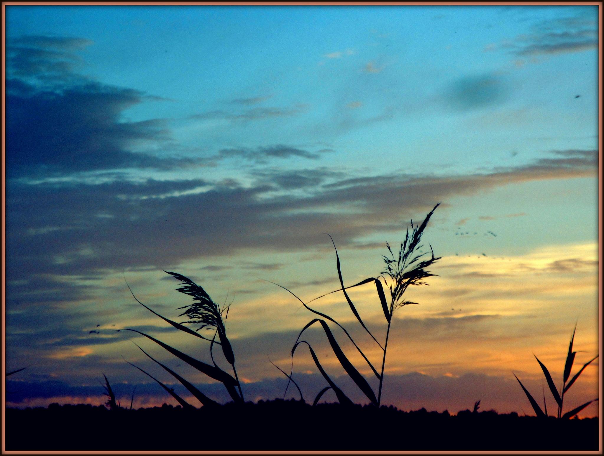 Colour sky by SigitaBer