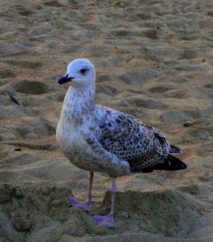 Sea gull by SigitaBer