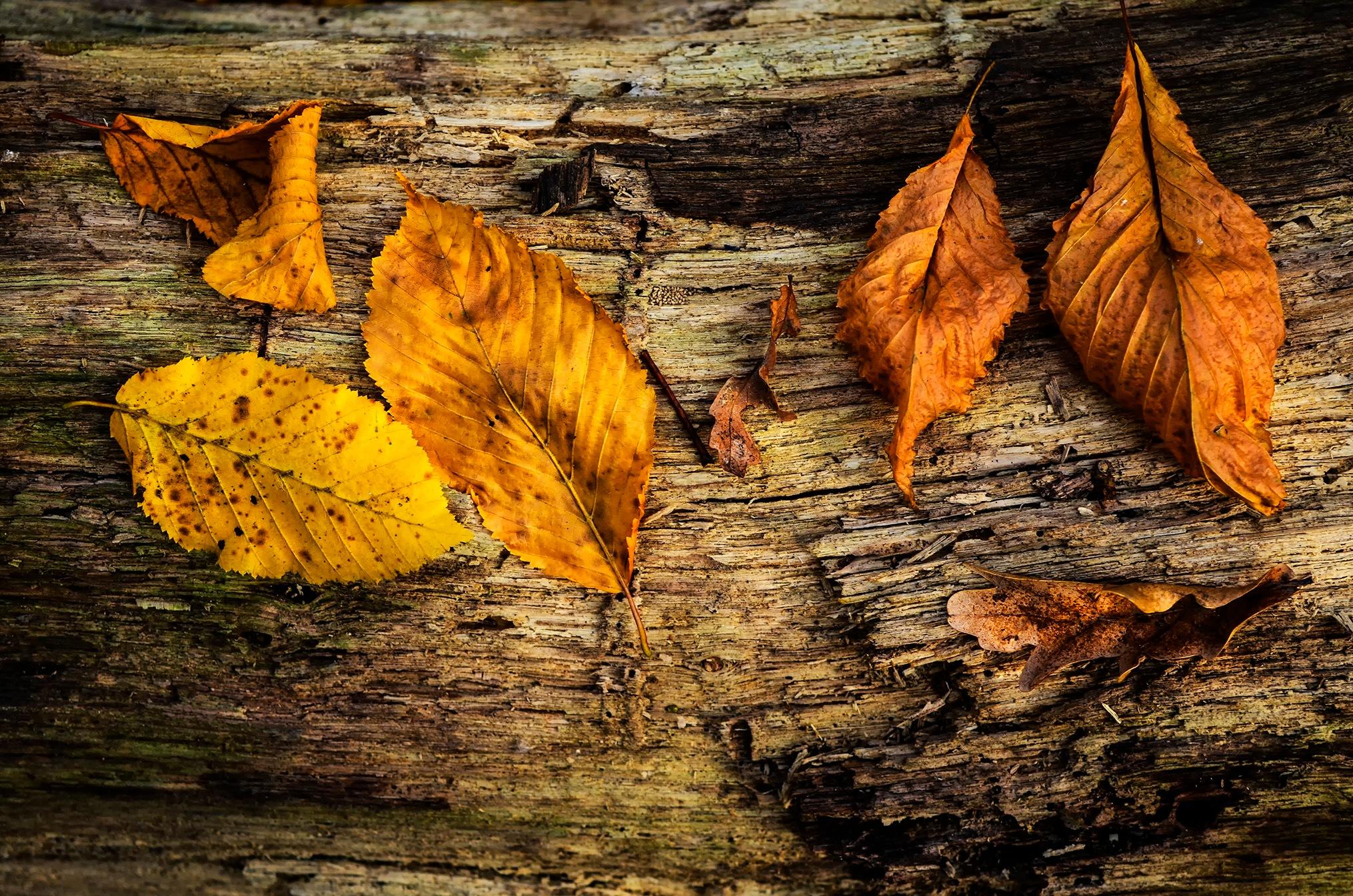 Autumn leaves by Mikaela Dana