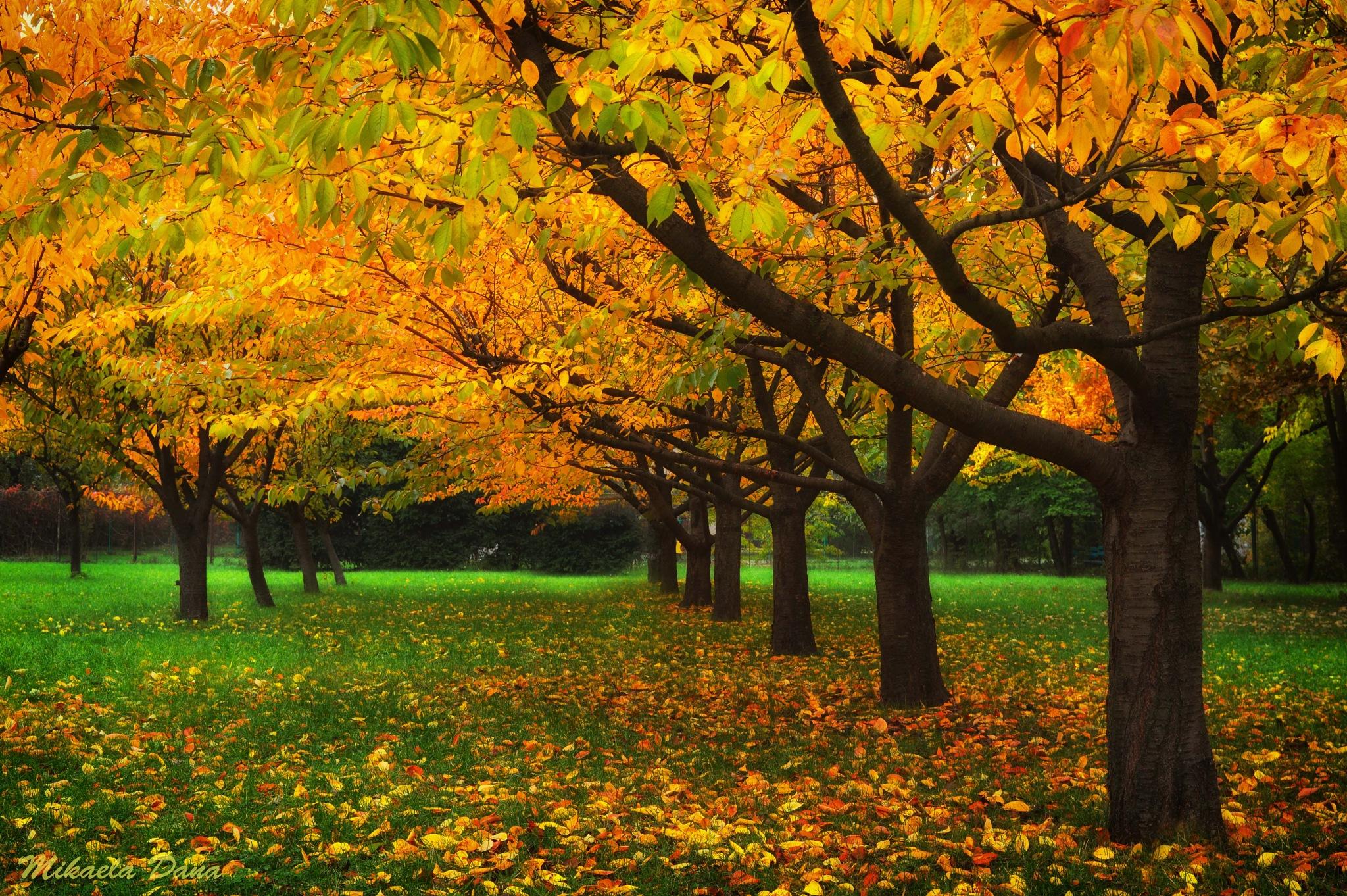 ... Autumn ... by Mikaela Dana