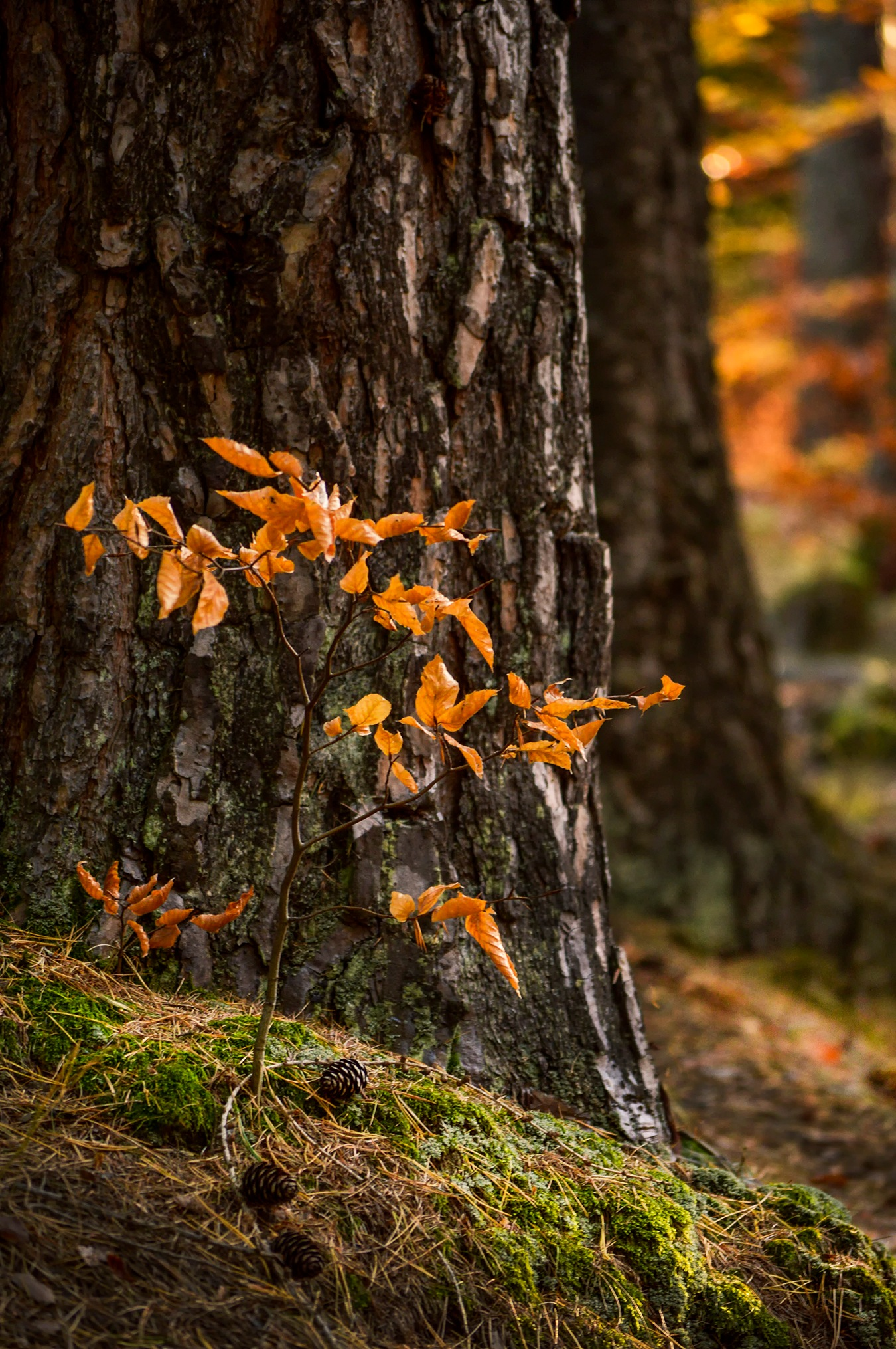 Autumn .. by Mikaela Dana