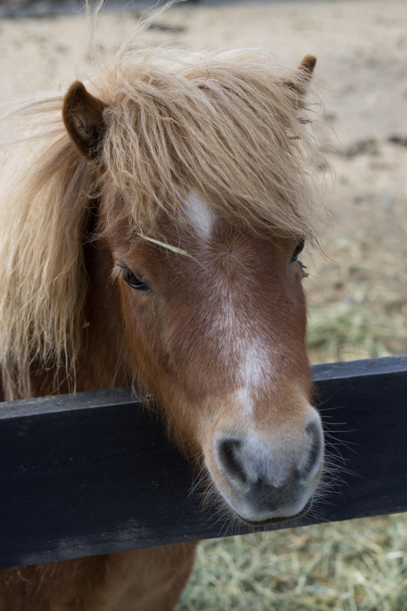Pony by Stephanie Paige