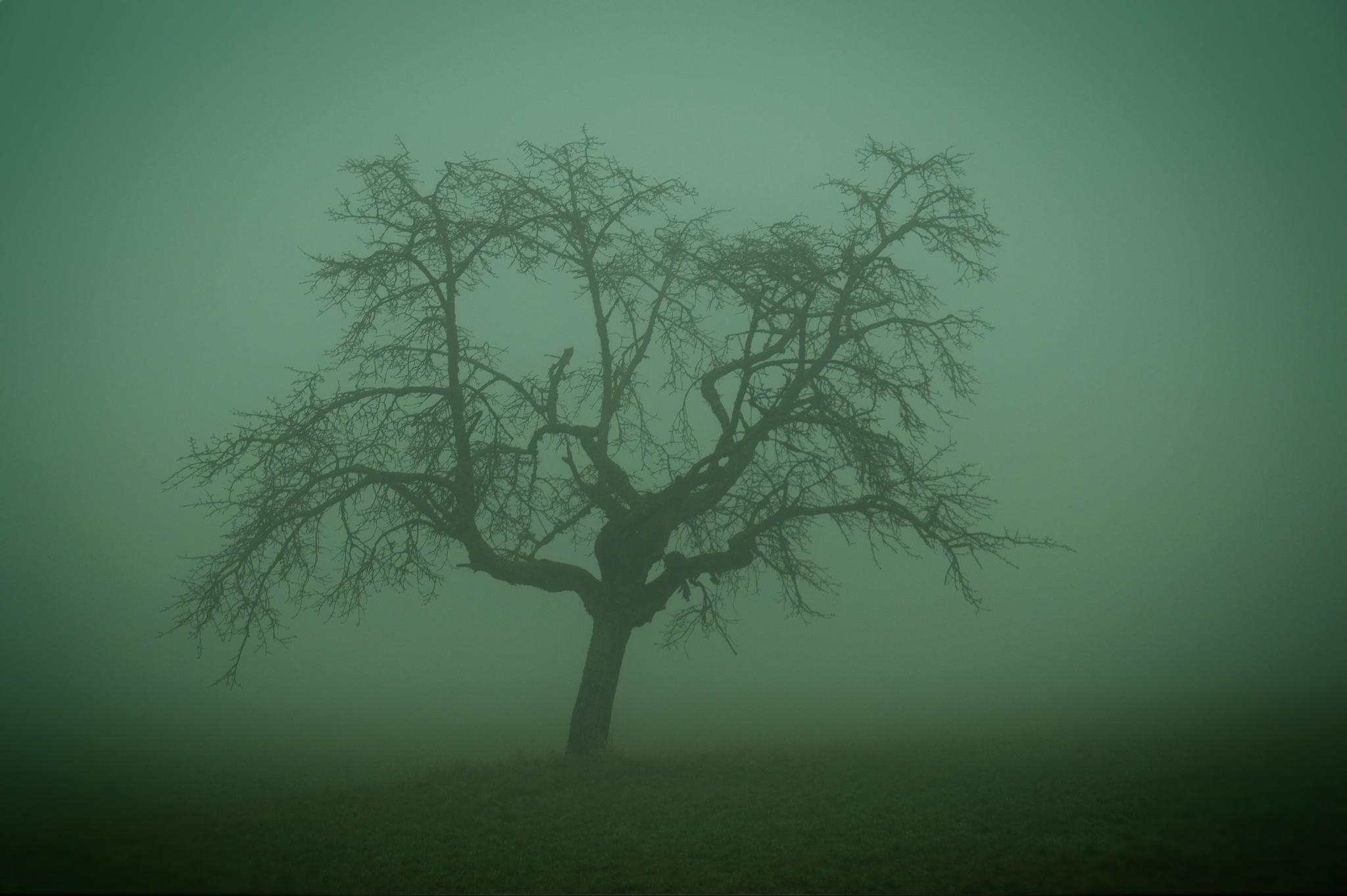 old tree by Aljosha
