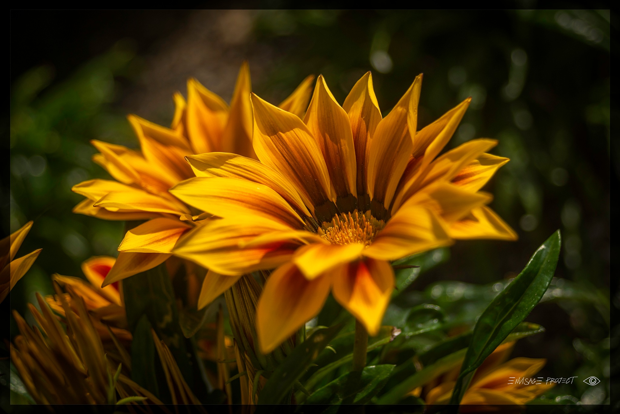 Siunflower by Paul Young