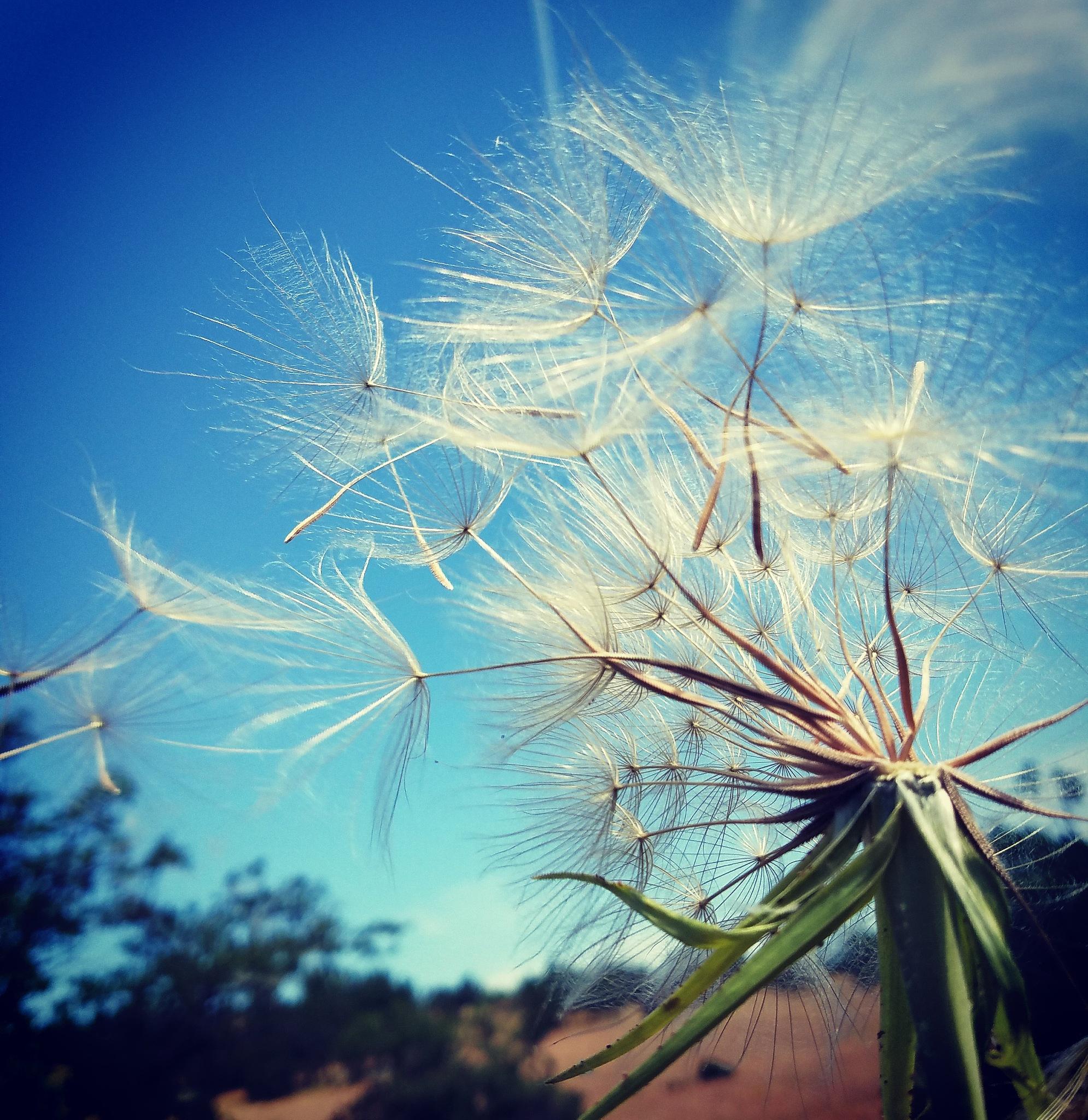 Make A Wish by Shari Lynn Foster