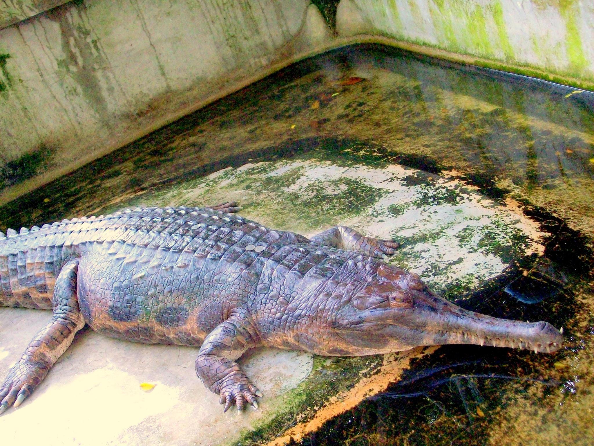 The Million Years Stone Park & Pattaya Crocodile Farm on December 30, 2015 by NatalyaParris