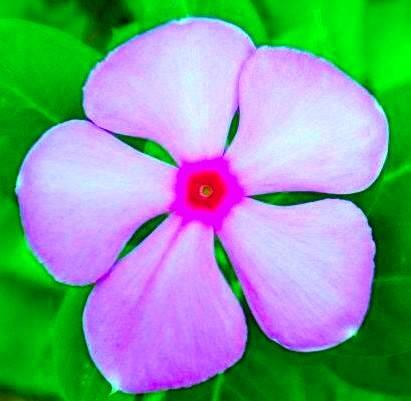 Flower by Bharat75
