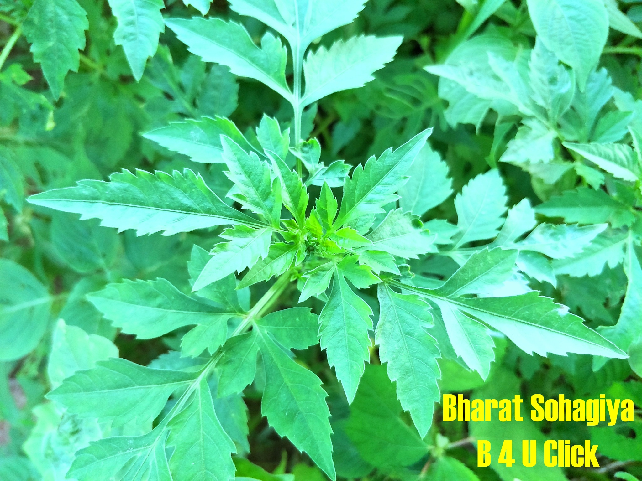 Green . . . . Green . . . . Nature by Bharat75