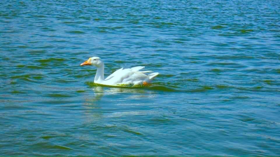 Swimming Enjoying by Bharat75