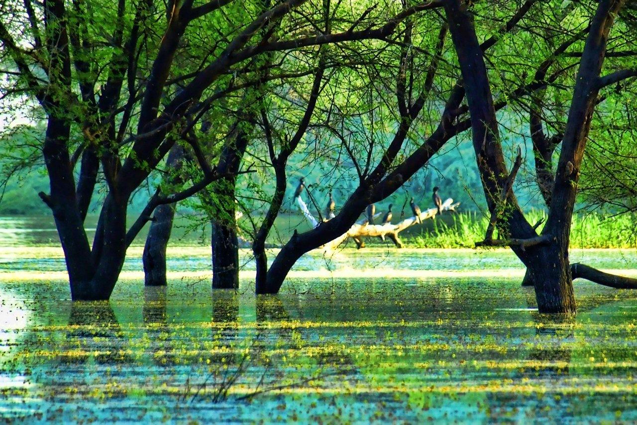 Nature Beauty - Thol Bird Sanctuary - Ahmadabad  by Bharat75