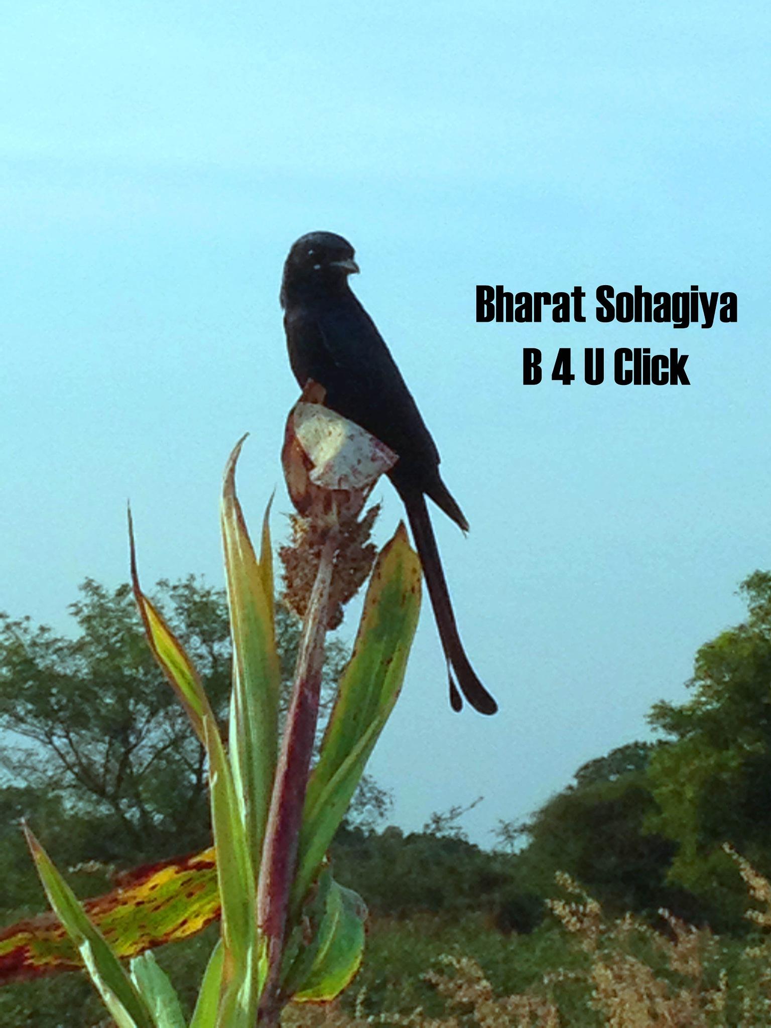 Bird Nature by Bharat75