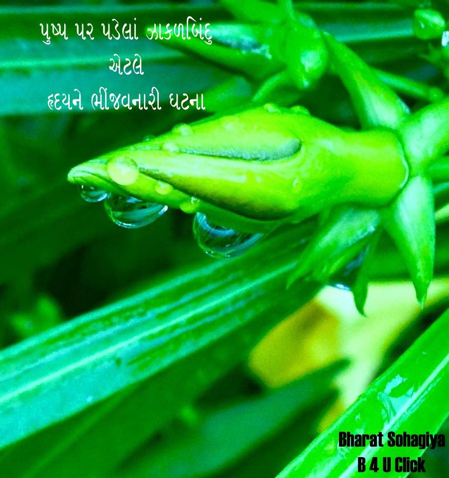 Raindrop . . . .  by Bharat75