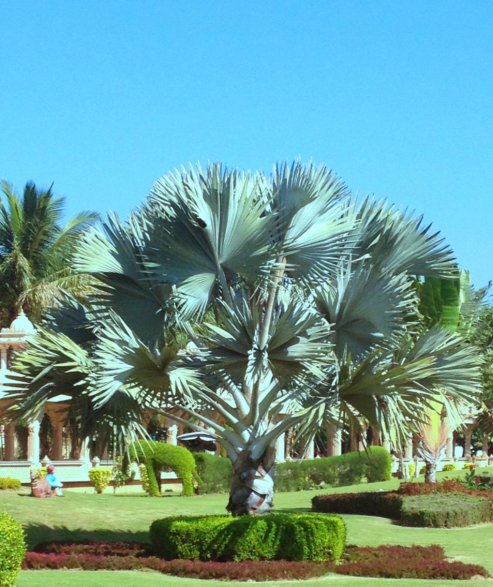 Tree Nature - Akshardham Temple - Garden - Surat by Bharat75
