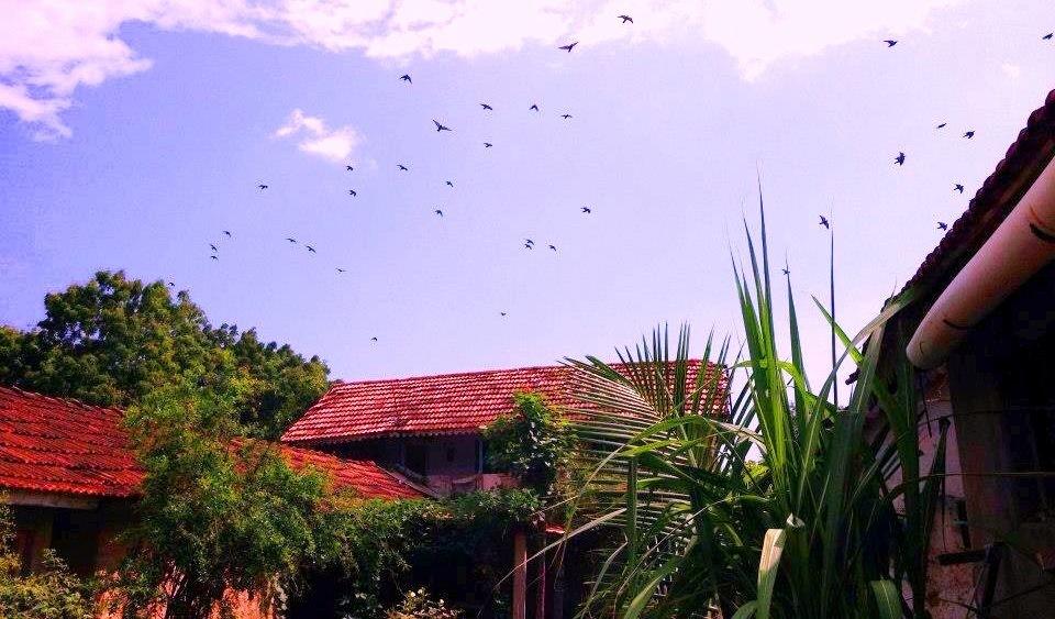 My Village Nature by Bharat75