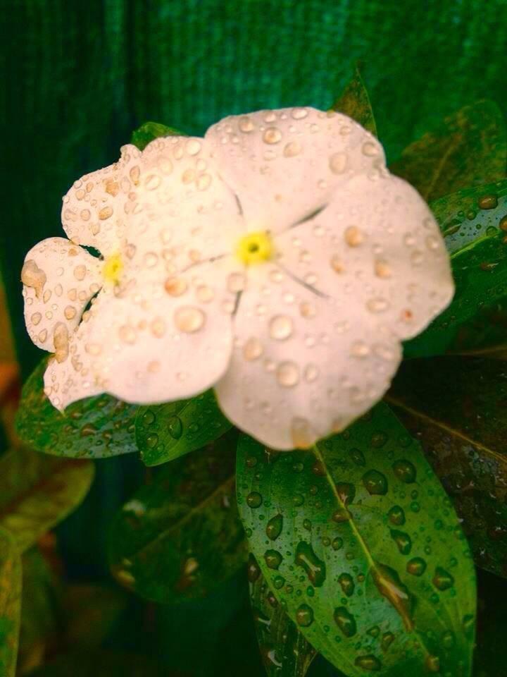 Rain drop  by Bharat75