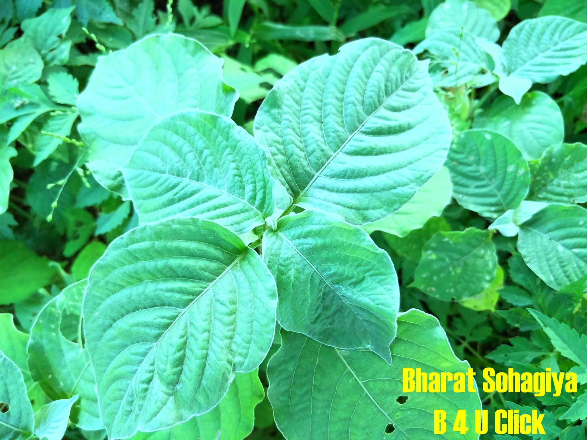 Green . . . . Green . . . .  by Bharat75