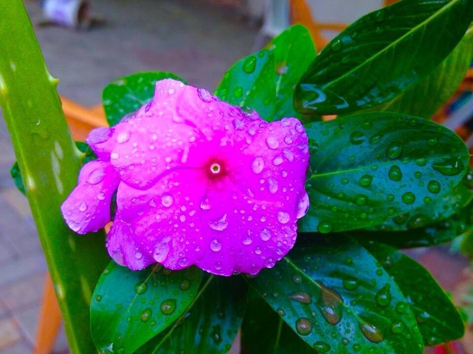 Raindrop by Bharat75