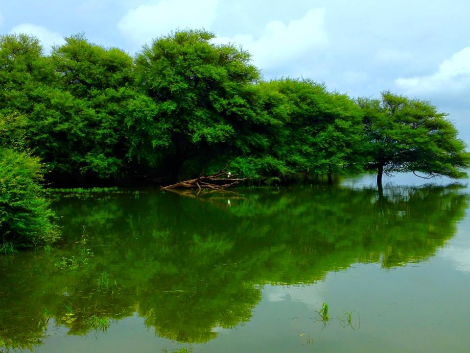 Beautiful Reflection Nature Composition - Thol by Bharat75