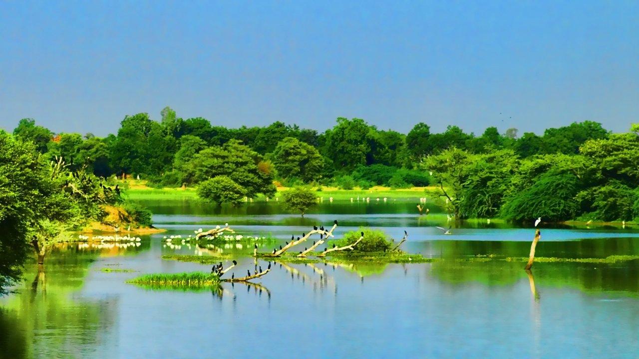 Thol Bird Sanctuary - Nature by Bharat75