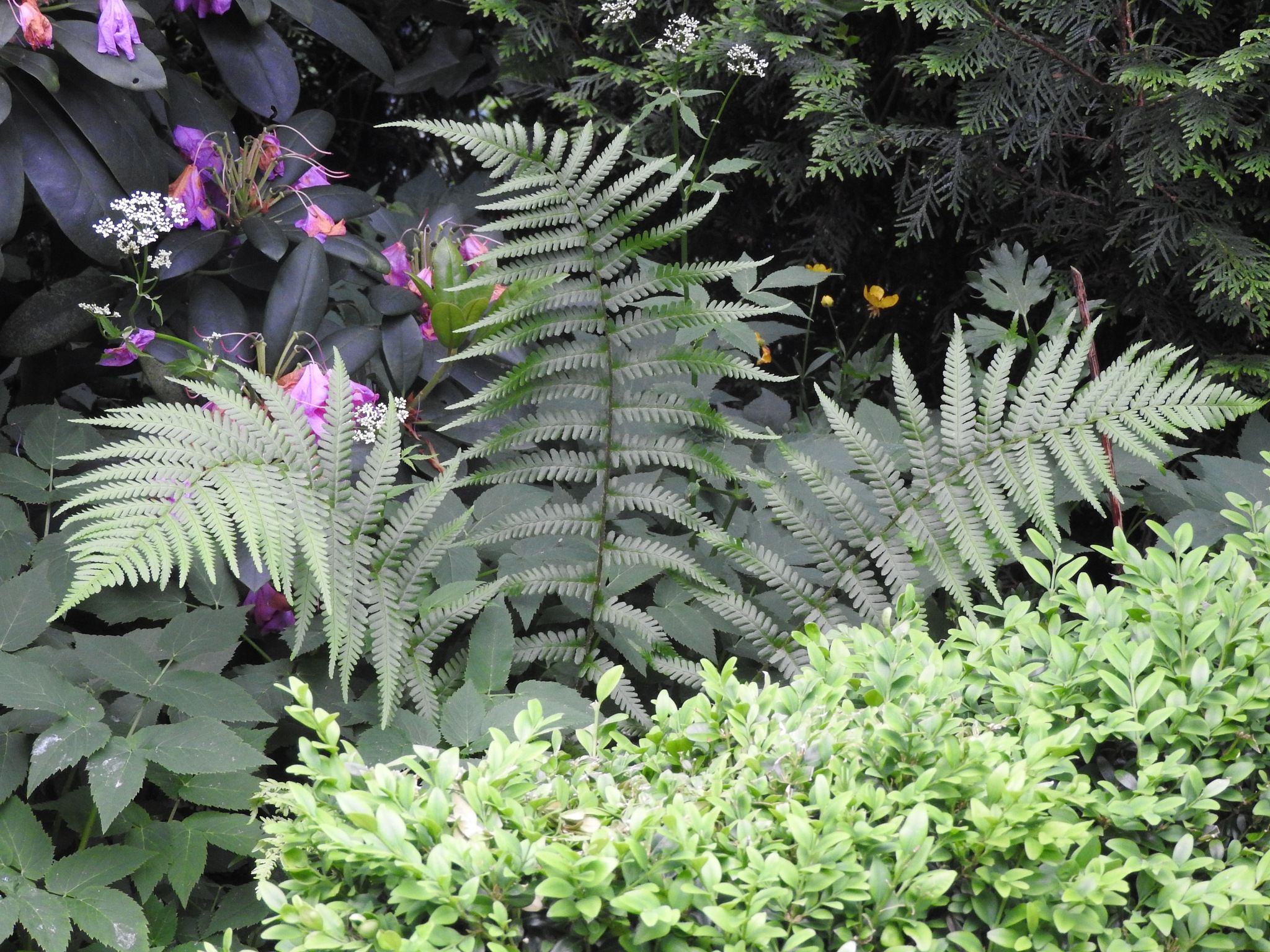 Some wild ferns appeared this summer in the garden by Paolo Paparazzi