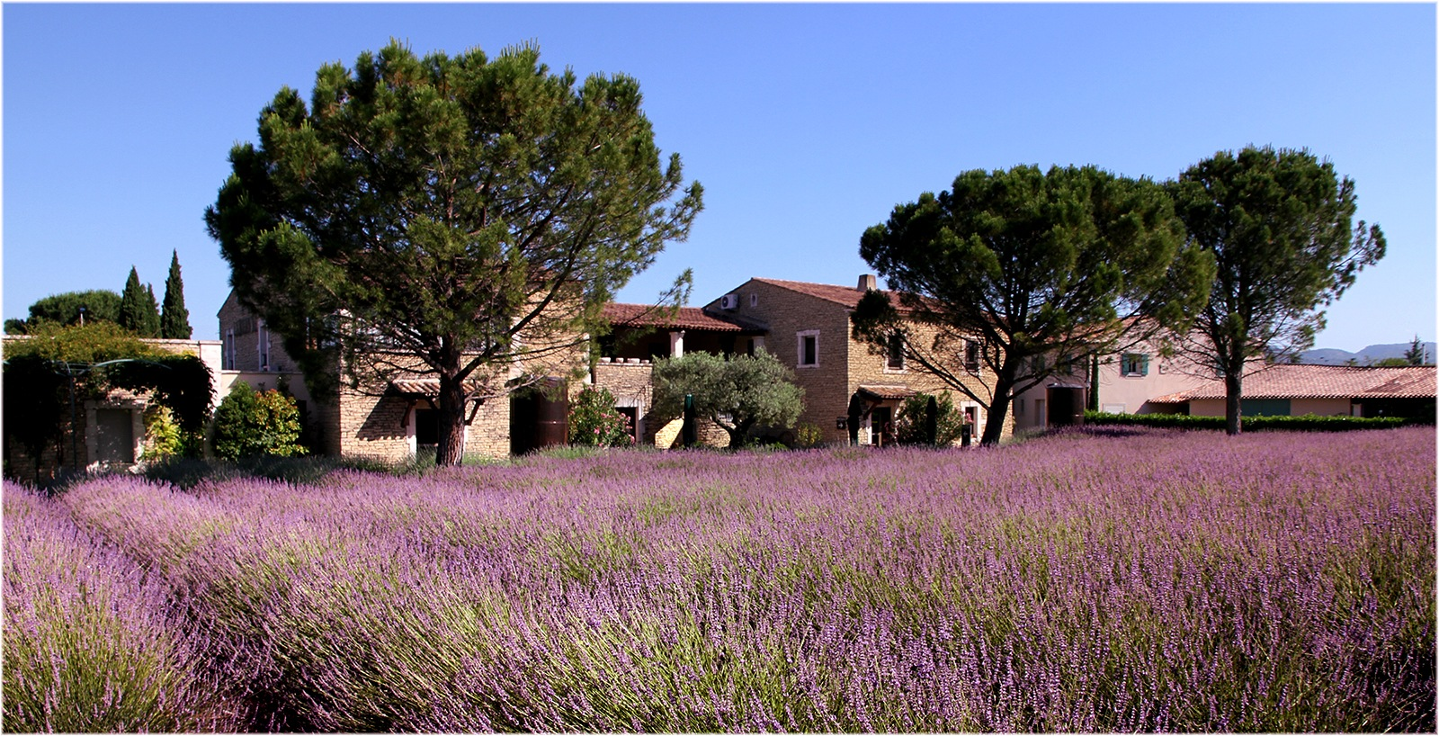 Provence by patzy
