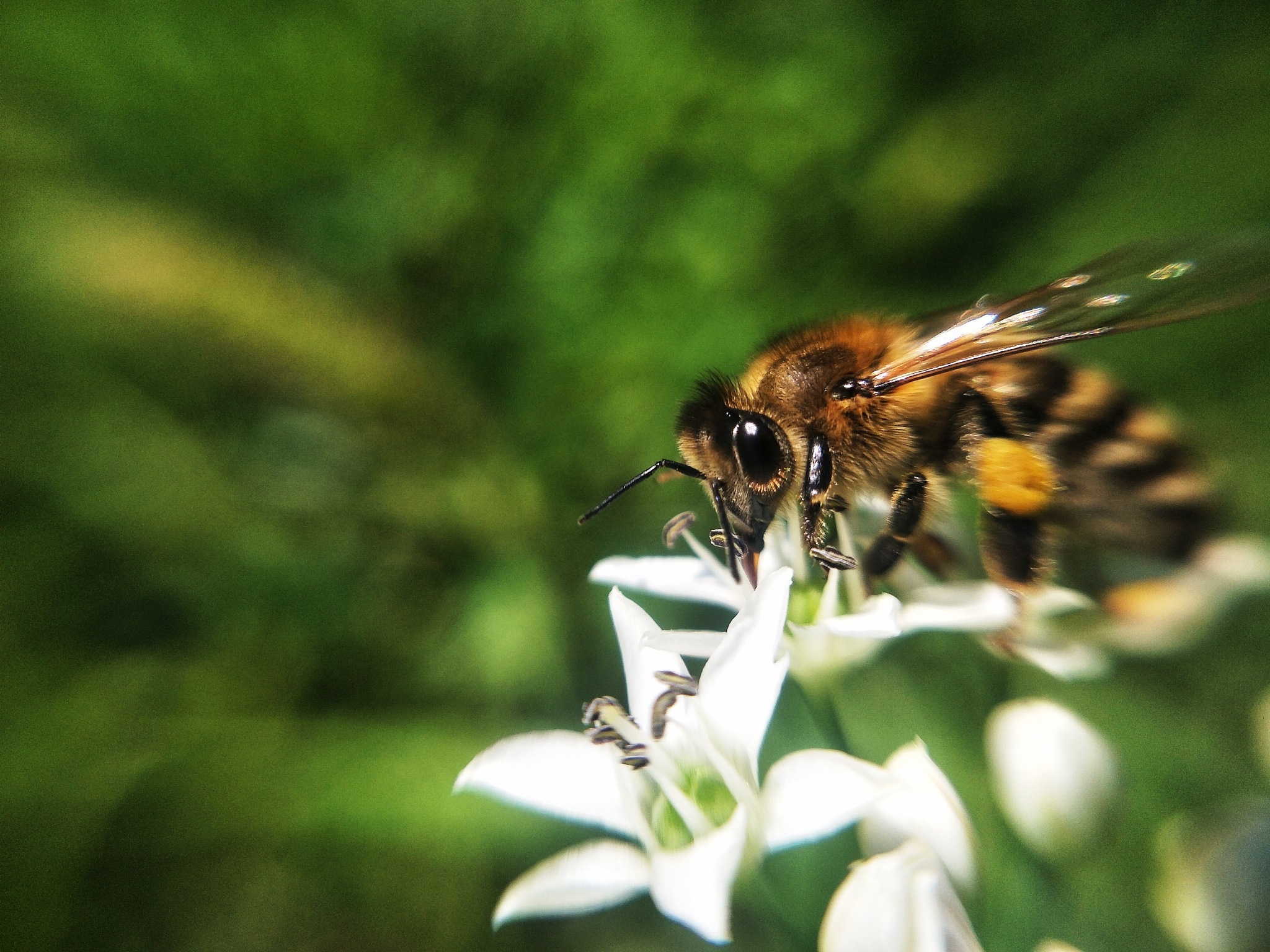 Bee by Aziz Turdiev