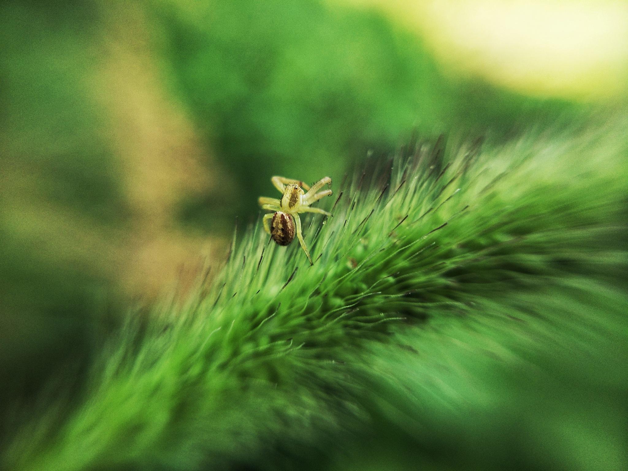 Little spider by Aziz Turdiev