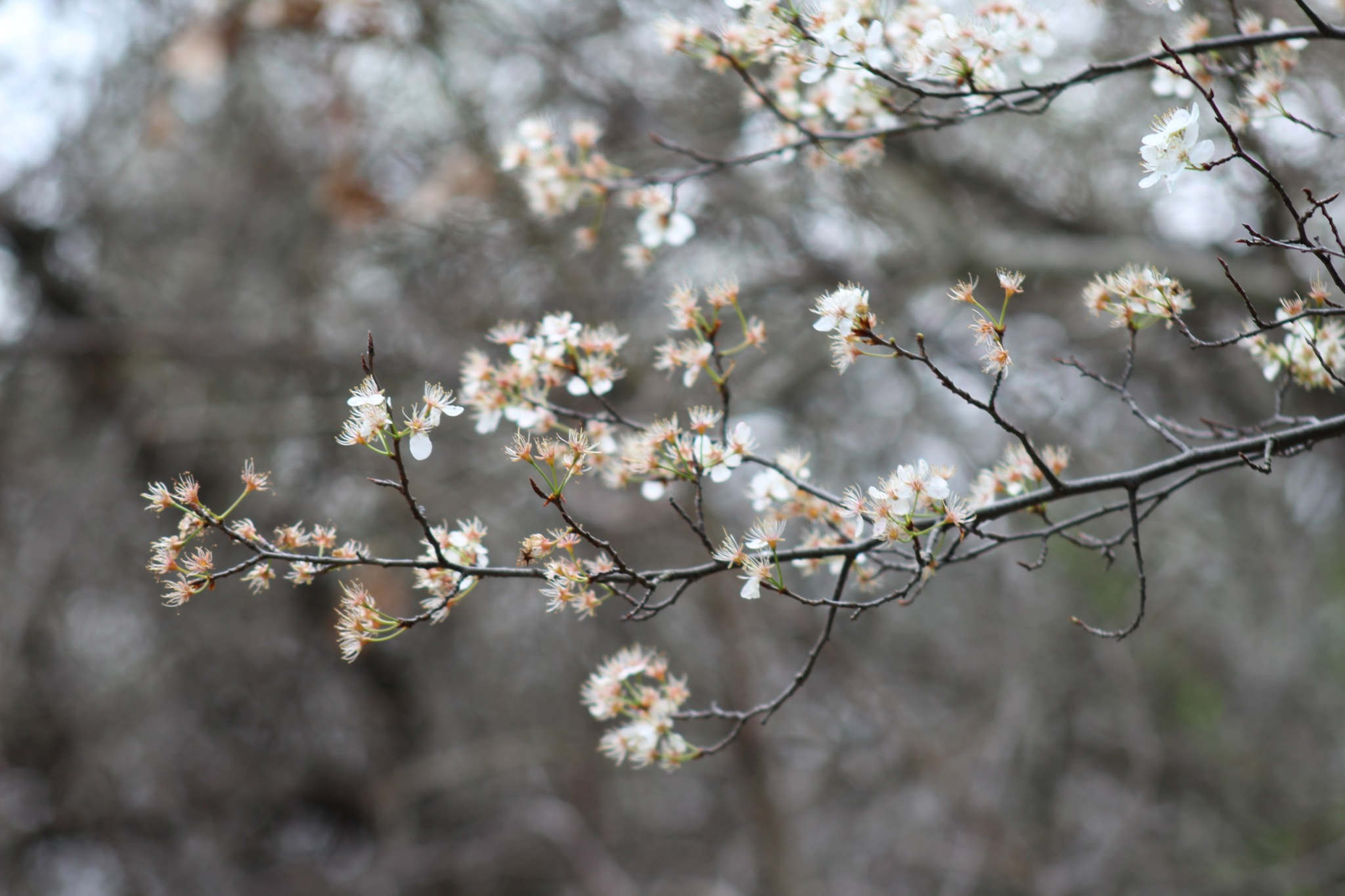 Spring  by Freddy Schwieger