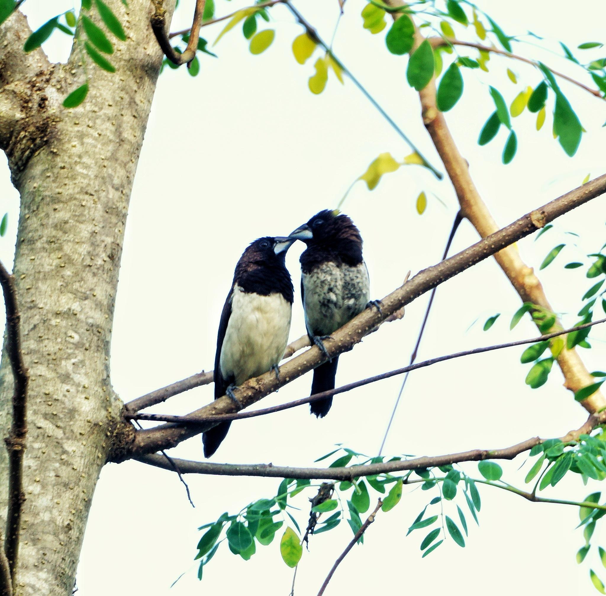 birds by fazeeha