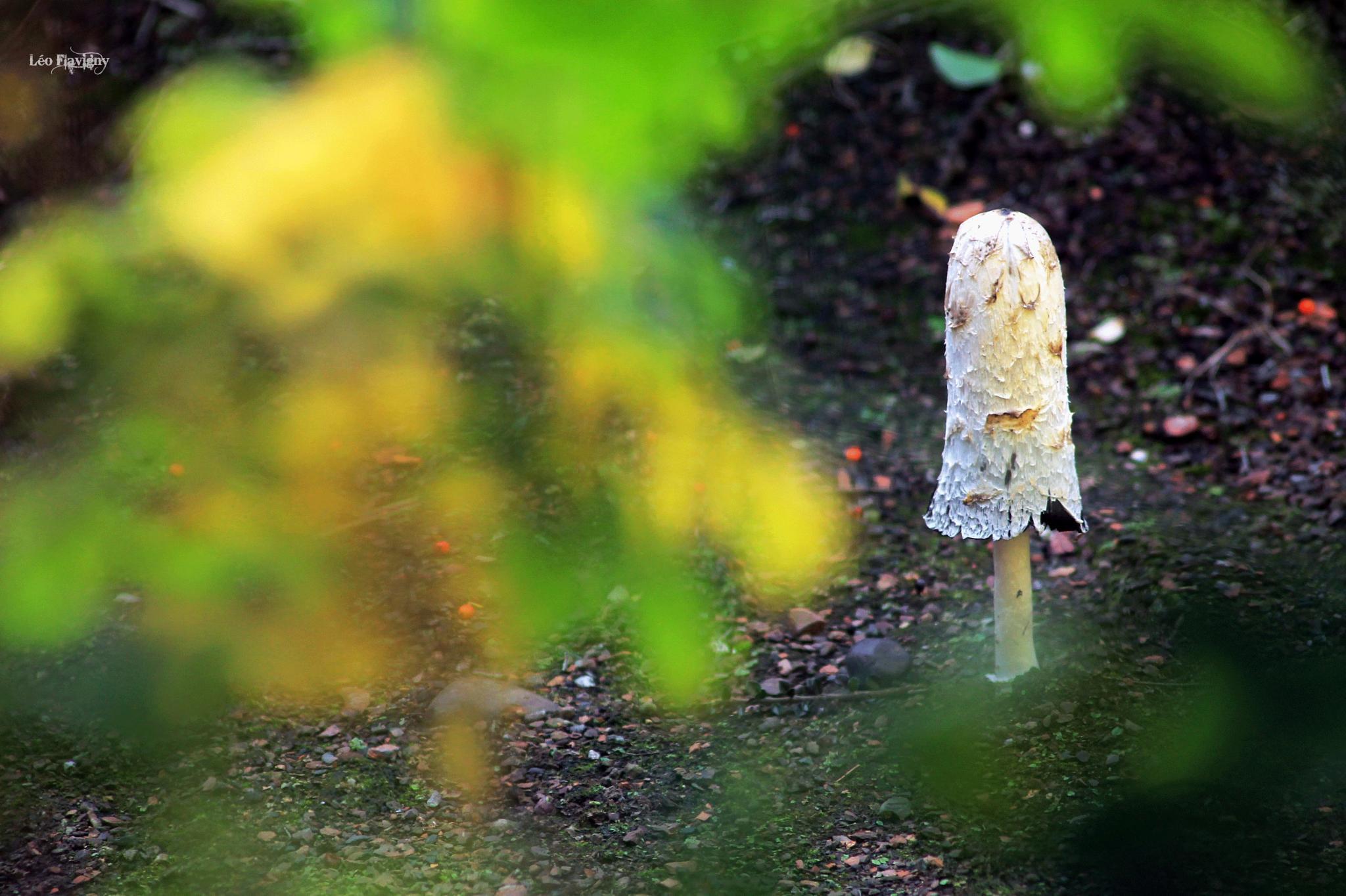 Photo in Nature #nature #mushroom #leaf #color #autumn