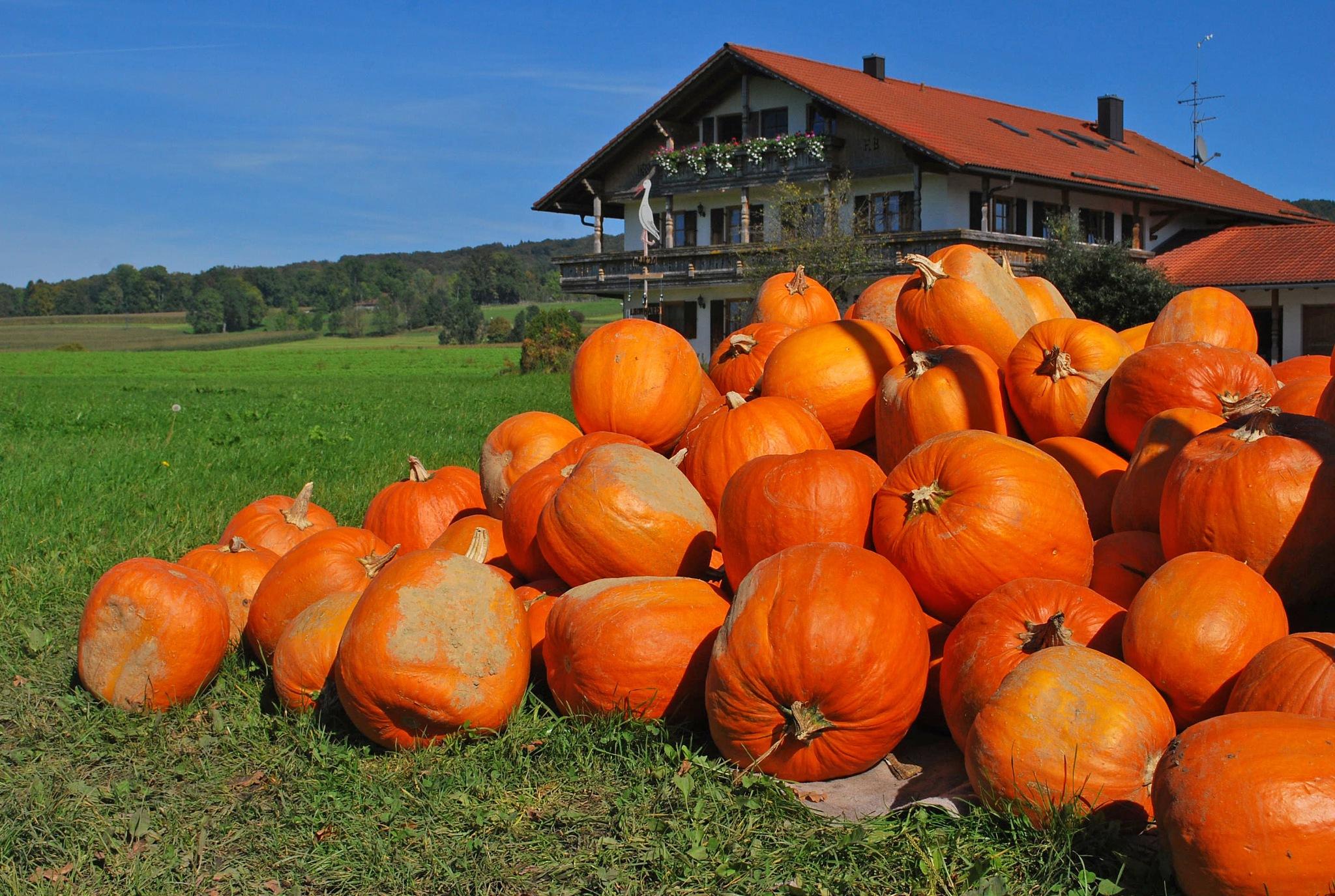 Pumpkin meeting at the farmhouse by liwesta