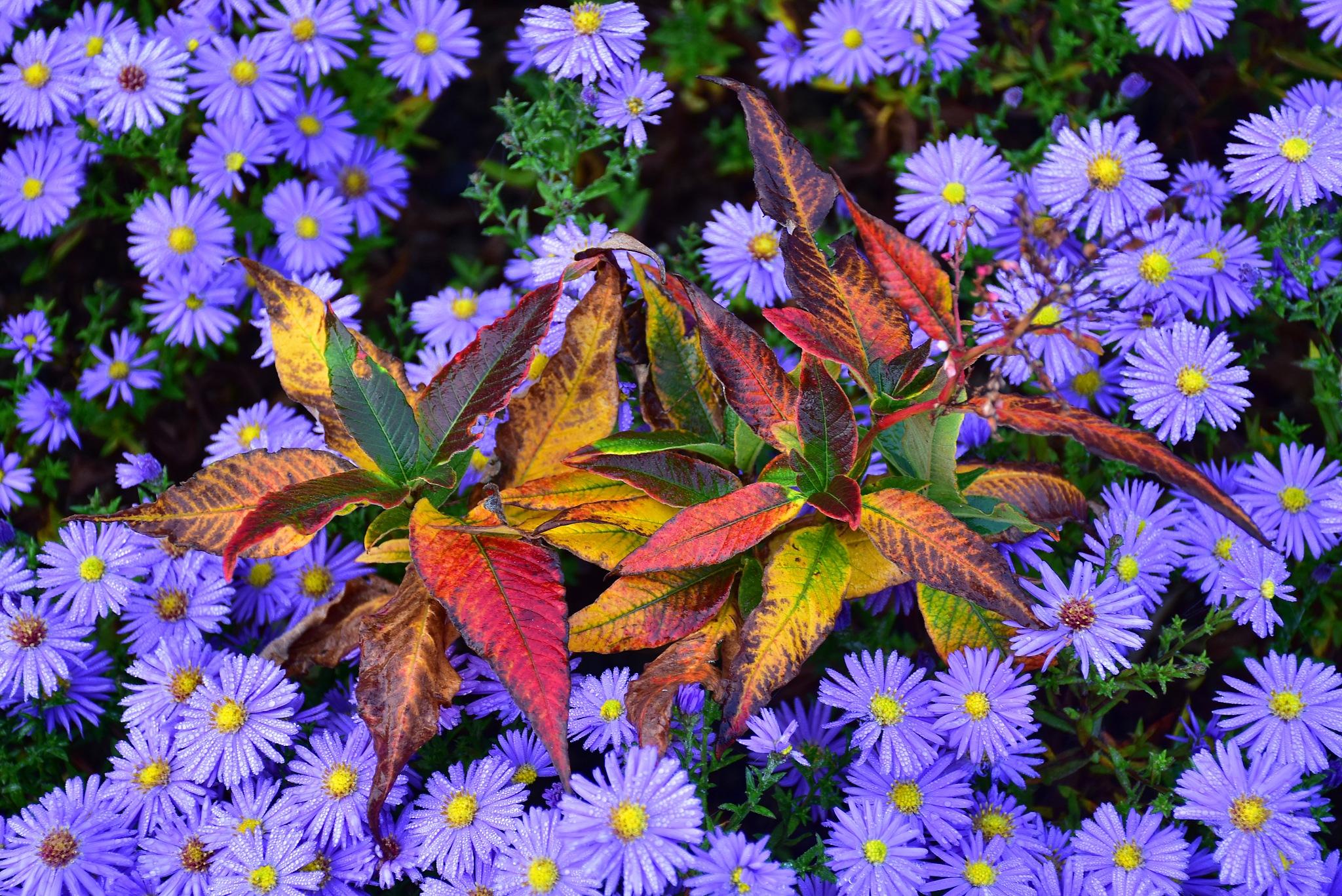 Autumnal branch nestled on purple by liwesta