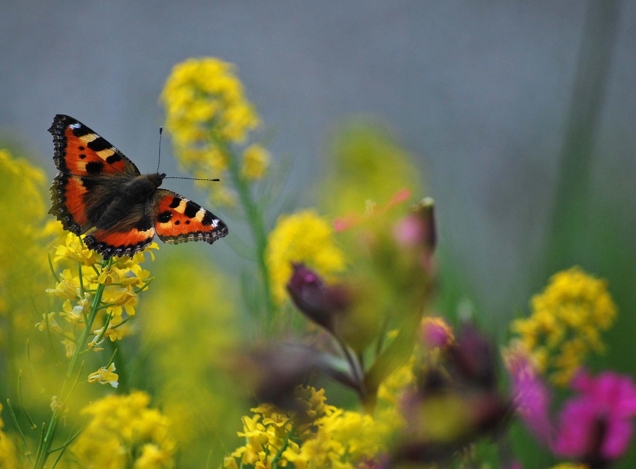 Butterfly Dream by liwesta