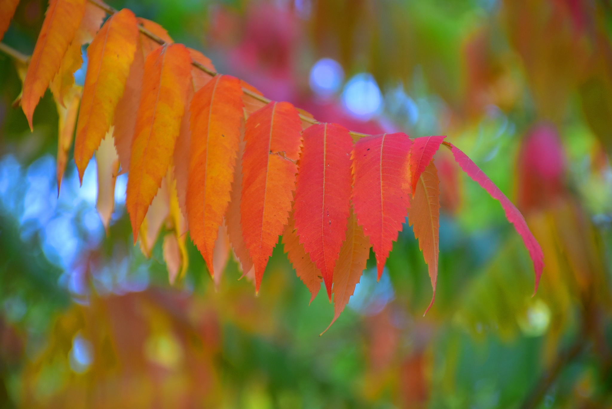 The fantastic colors of autumn by liwesta