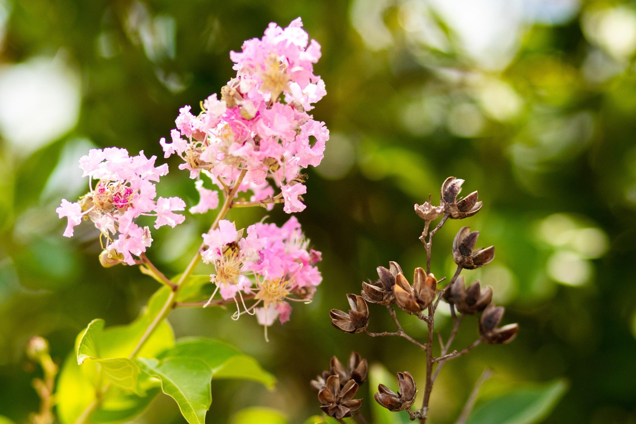 Flower by Brookelyn