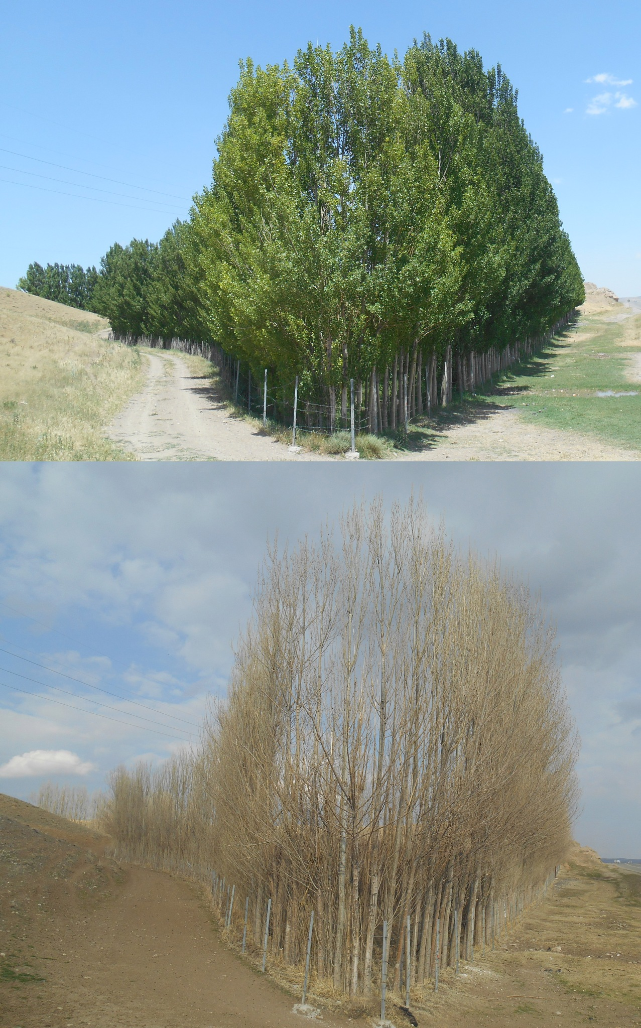 two different seasons by miladfhd1991