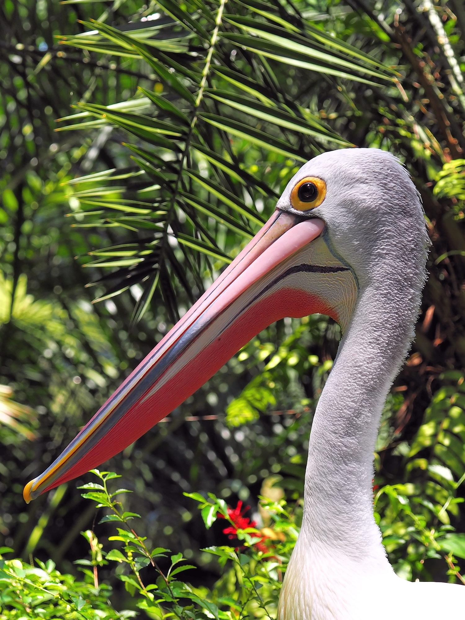 Pelican by RoseTattoo