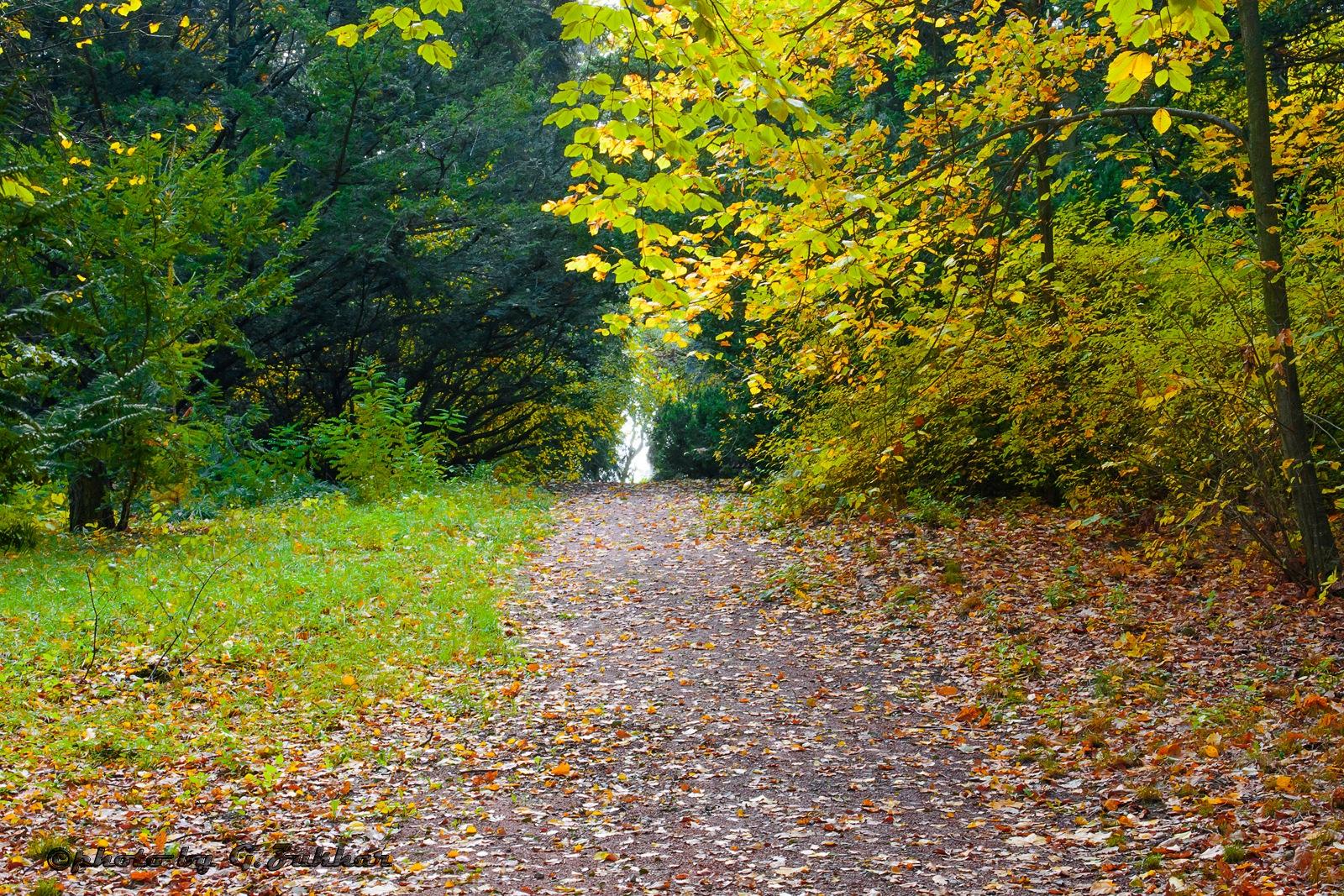 Colours of Autumn by Georgii Zukhar