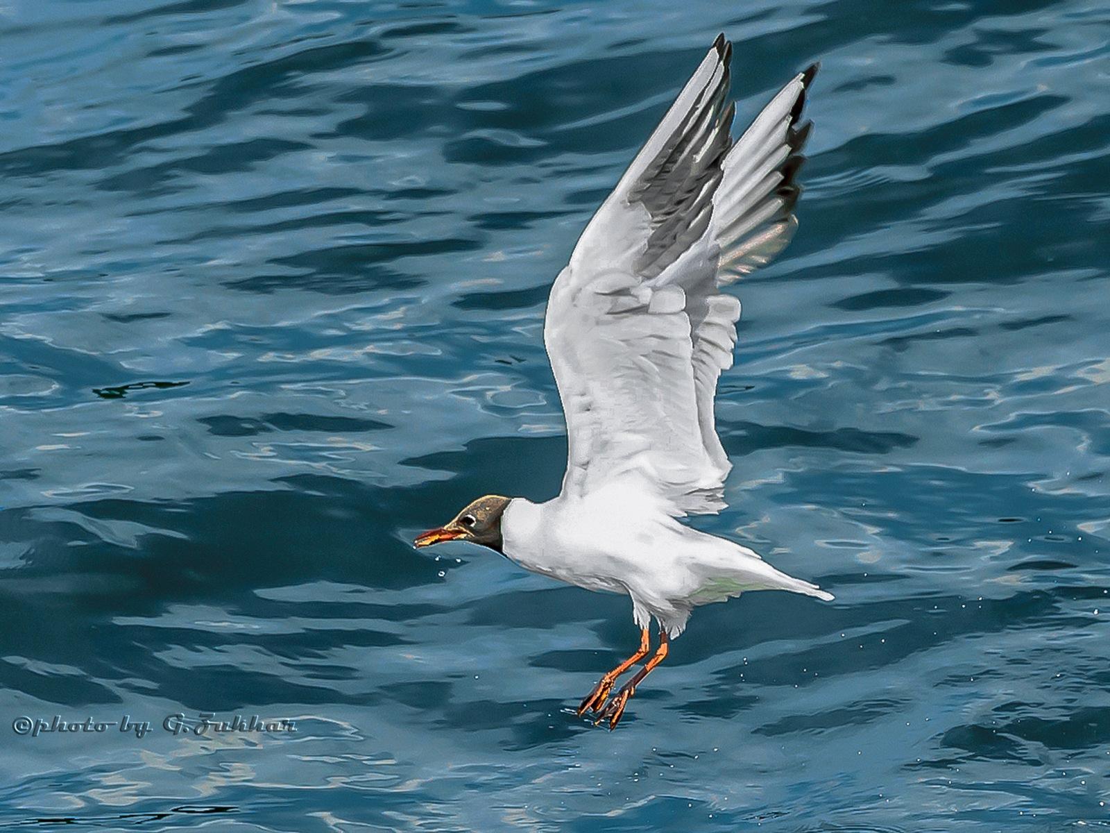 Gull II by Georgii Zukhar