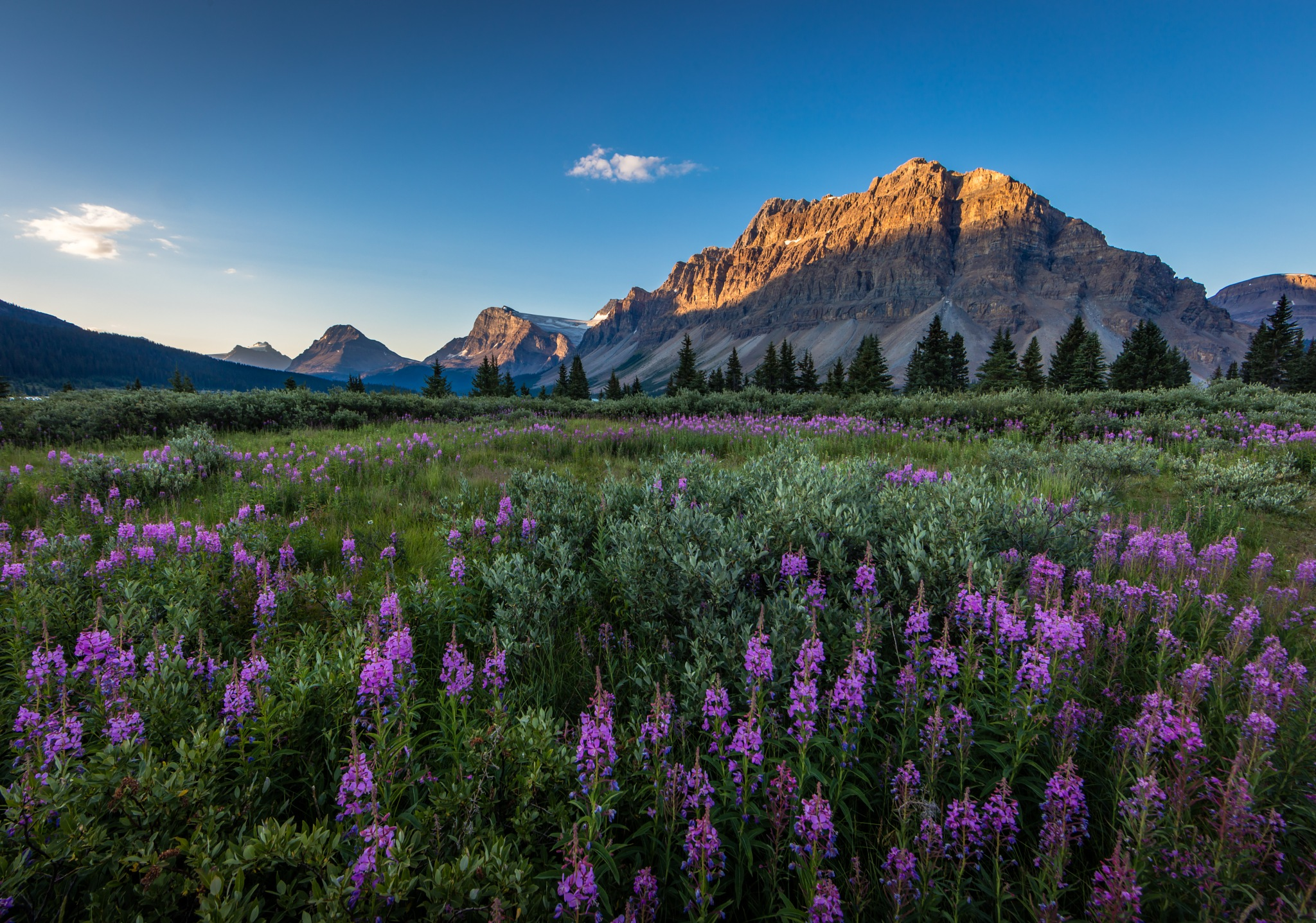Lupine II by Bill Settle