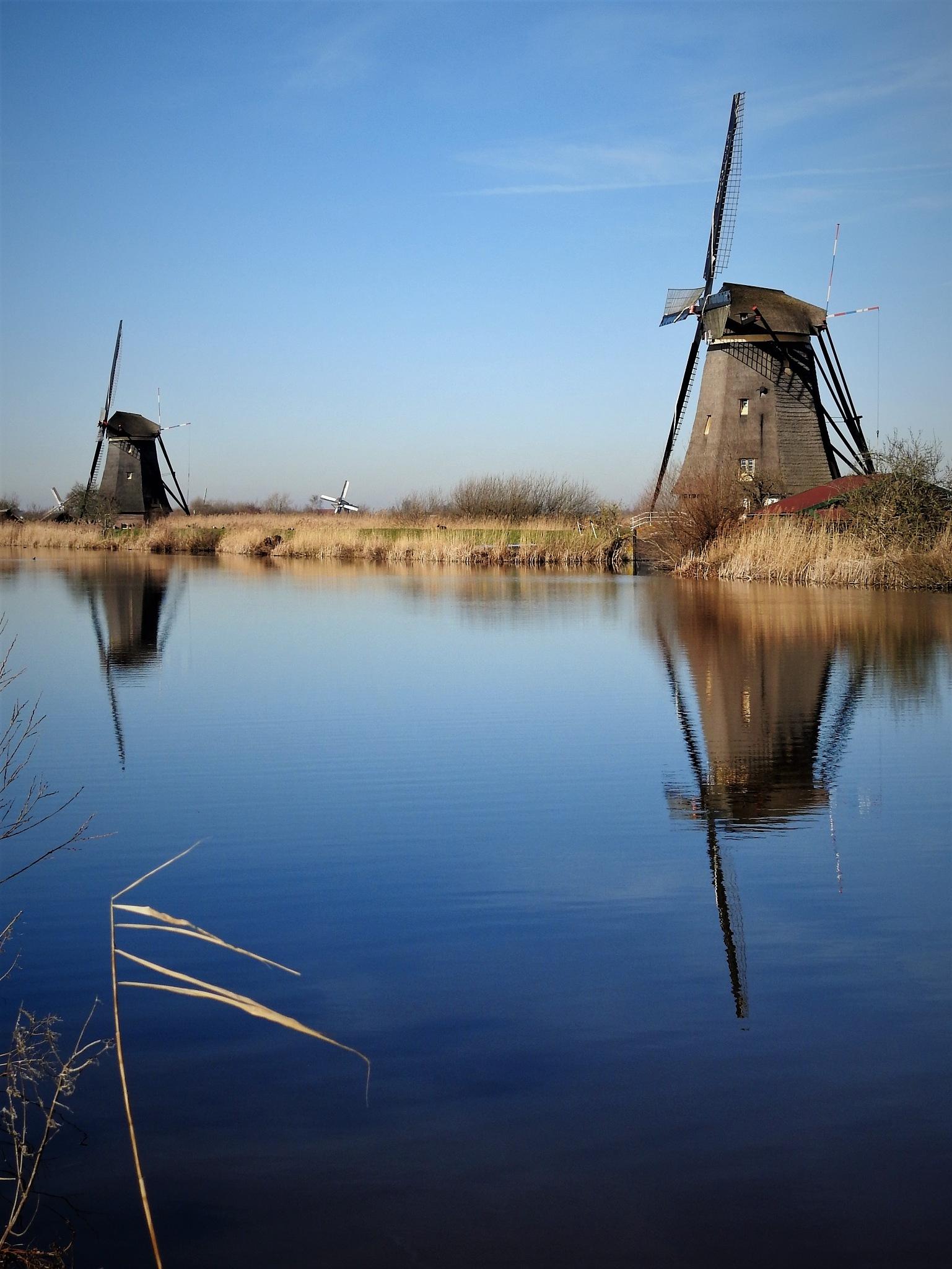 Photo in Landscape #molen #windmolen #mill #mills #wind mills #wind mill #kinderdijk #netherlands #nederland #sunshine #sky #water #reflection #mirror #daylight #sunlight #reed #blue #canal #travel #landscape #landscapes #landmark