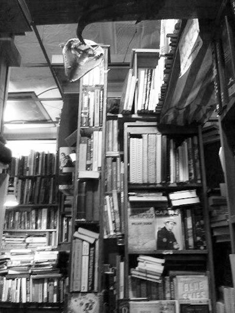 Book world  by Rosario Photography