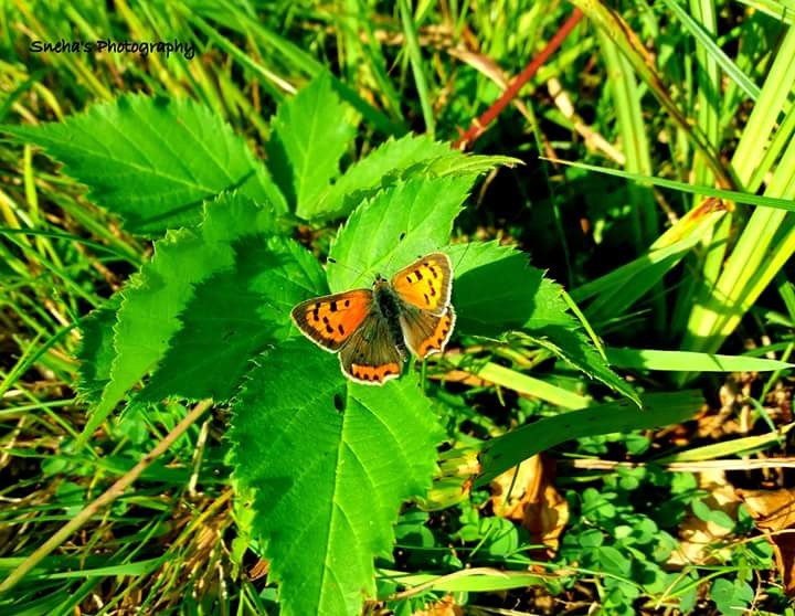 Beautiful Butterfly by SnehaBabar
