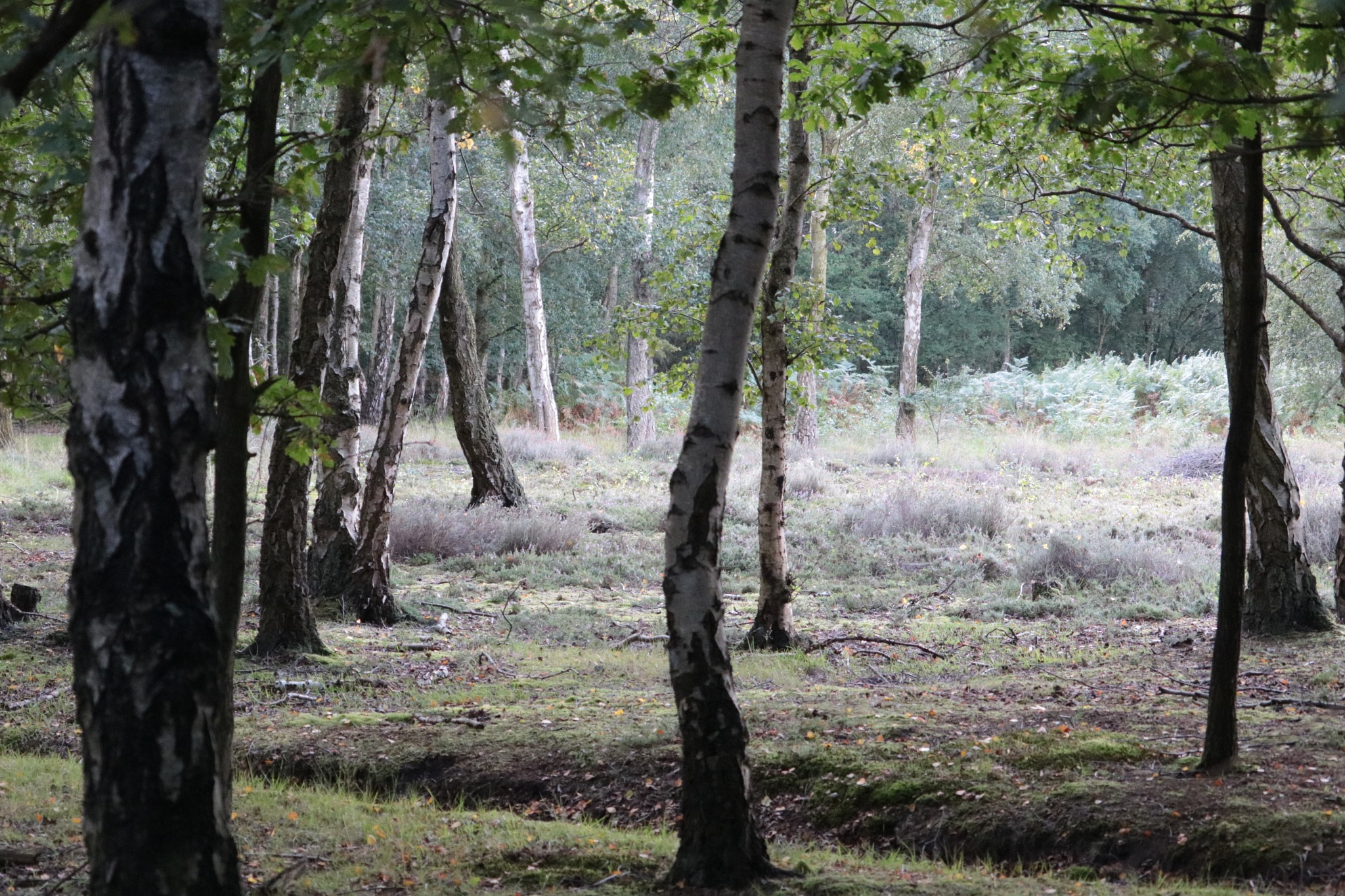 Skipwith Common by Nicki Fothergill
