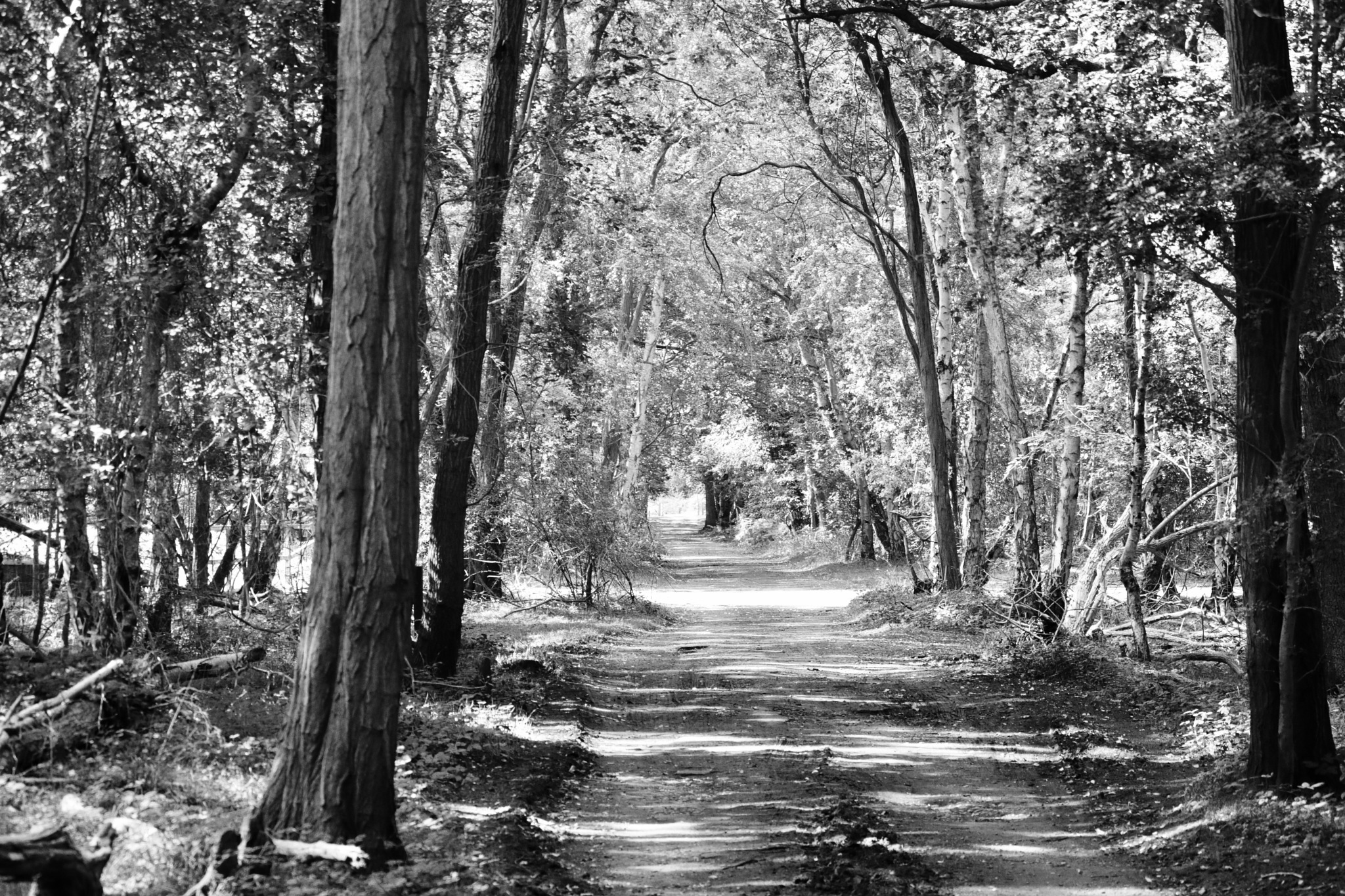 The road out of Skipwith Common by Nicki Fothergill