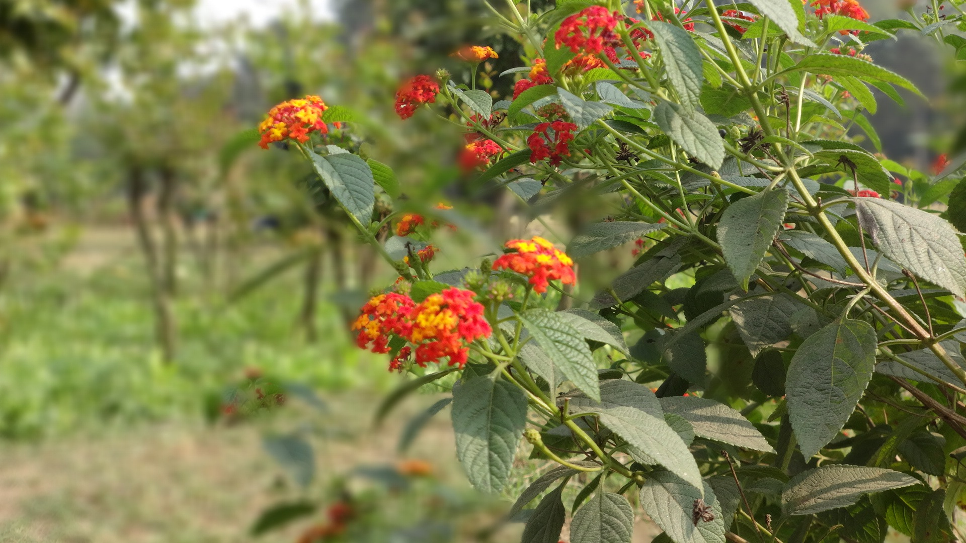 wild flower by Inddrani Kar